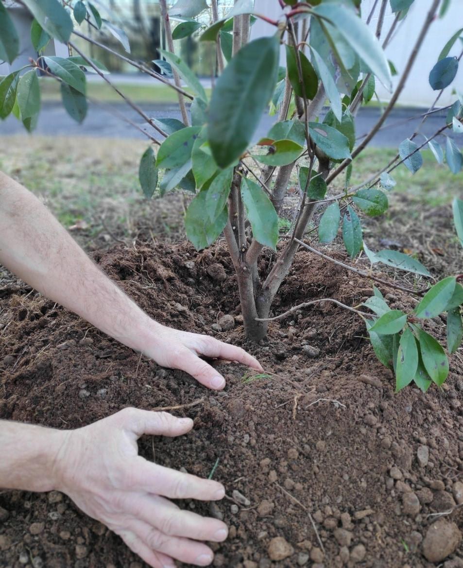 Maurizio Pozzi, Fondatore di Gruppo Pozzi, e il figlio Ruggero Andrea Pozzi, Ceo del Gruppo, celebrano con una foto l'avvio dell'operazione Carbon Neutral entro il 2025: sostenibilità, eco friendly, alberi, CO2, ecologia, azienda sostenibile